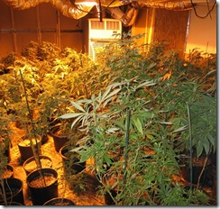 Marijuana Grow Houses Increased Drug Penalties
