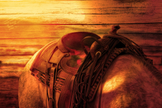 DUI on a Horse